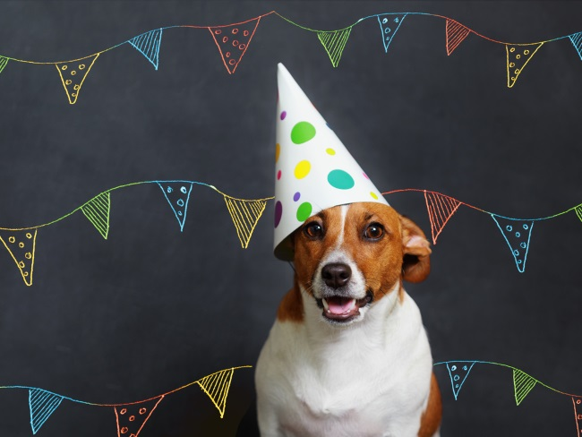 dog-party-hat-650px.jpg